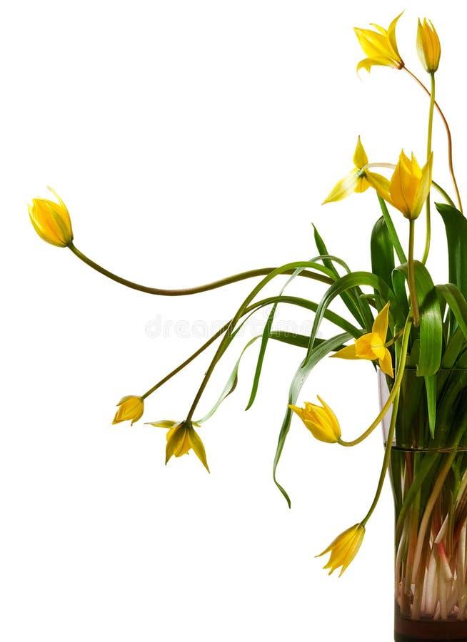 Flores amarillas hermosas en un florero imagen de archivo libre de regalías