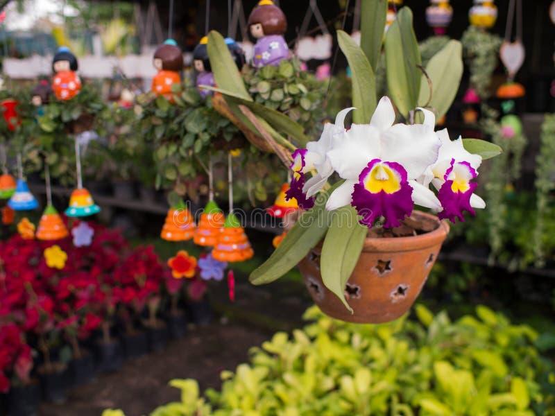 Flores amarillas púrpuras blancas de la orquídea de Cattleya imágenes de archivo libres de regalías