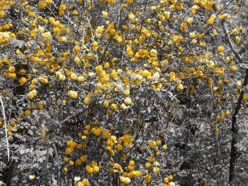 Flores amarillas que se colocan hacia fuera en una muchedumbre fotos de archivo
