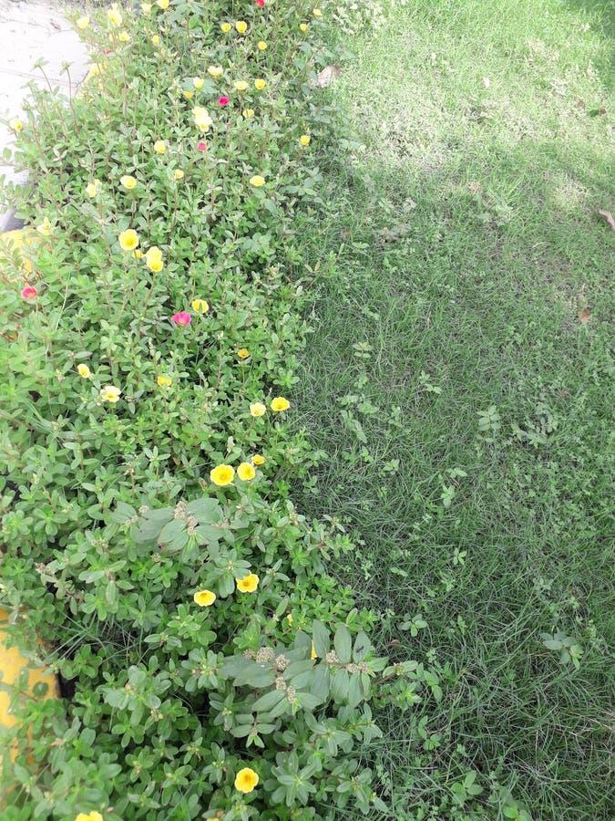 Flores amarillas rojas de la naturaleza y árbol verde hermoso y éste imagen de archivo