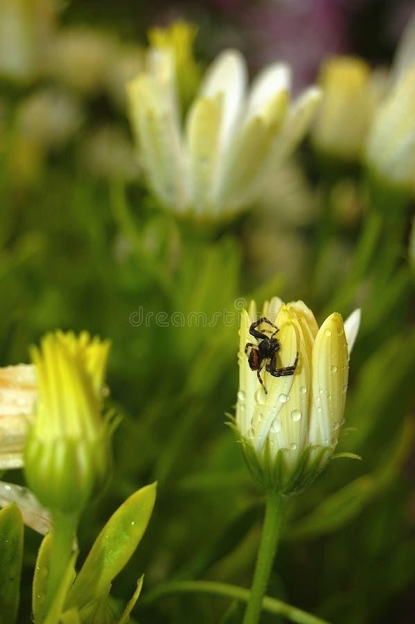 Flores amarillas y pequeña araña fotos de archivo libres de regalías