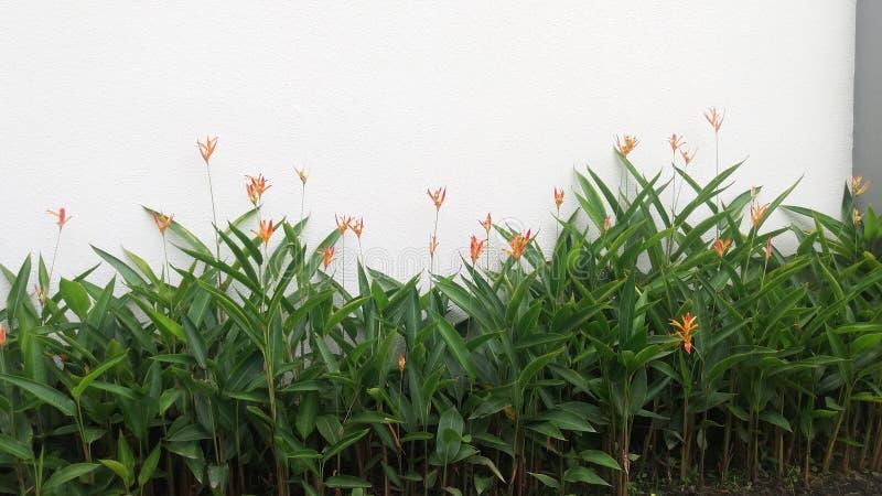 Flores anaranjadas foto de archivo libre de regalías
