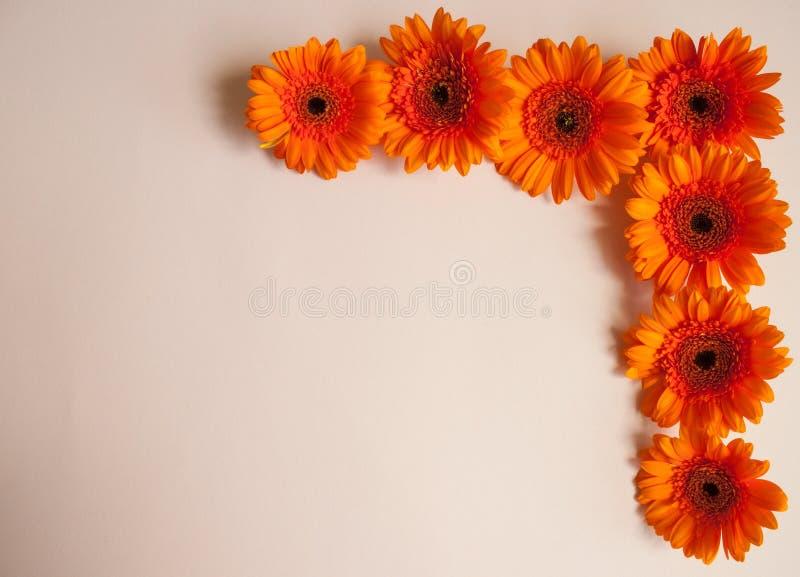 Flores anaranjadas del gerbera foto de archivo libre de regalías