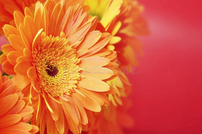 Flores anaranjadas hermosas imagen de archivo libre de regalías