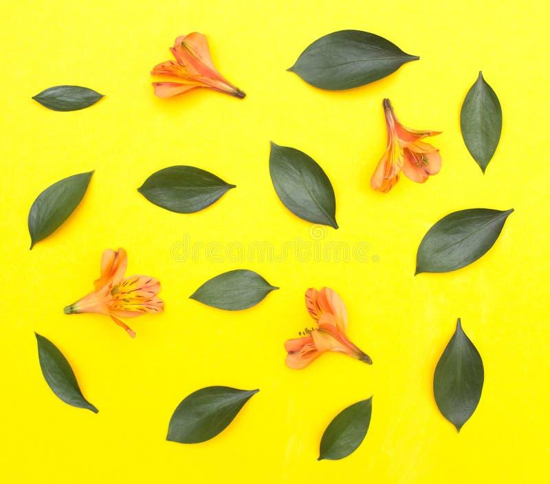 Flores anaranjadas naturales y pétalos verdes en un fondo amarillo, fondo festivo, primavera del hibisco imagen de archivo libre de regalías