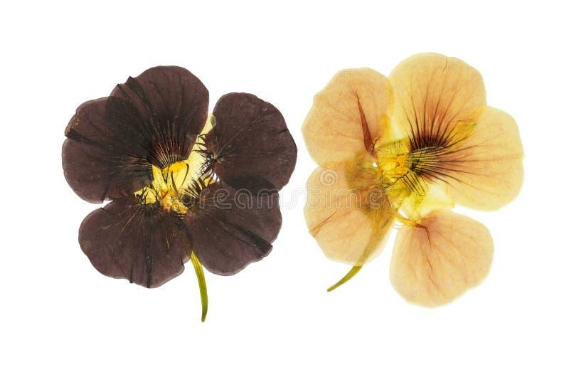 Flores anaranjadas y marrones delicadas presionadas y secadas imágenes de archivo libres de regalías