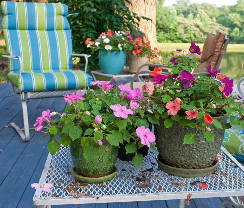 Flores ao ar livre fotografia de stock royalty free