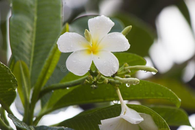 Flores após uma chuva imagens de stock royalty free
