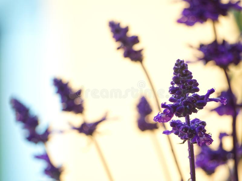 Flores ap?s a chuva foto de stock