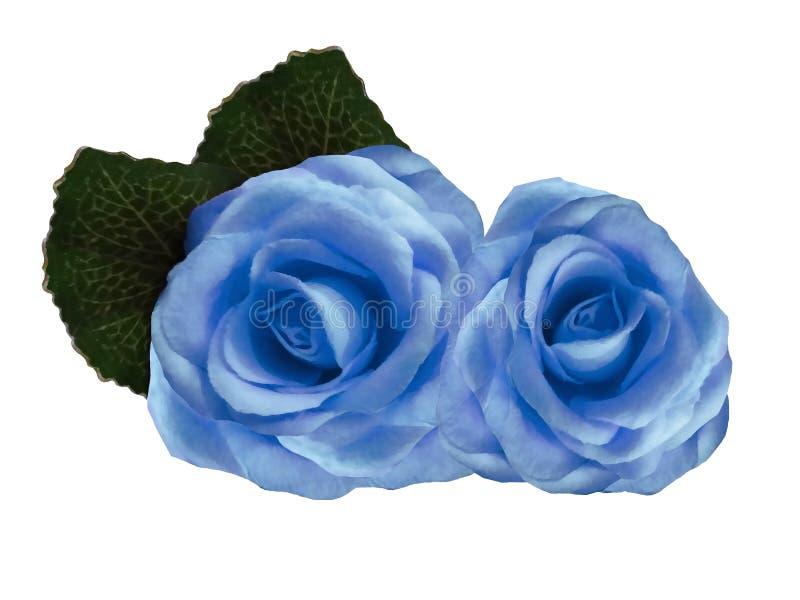 Flores aquarelas de rosas sobre fundo branco. Rosas azuis isoladas com caminho de recorte sem sombras. Para o projeto imagem de stock