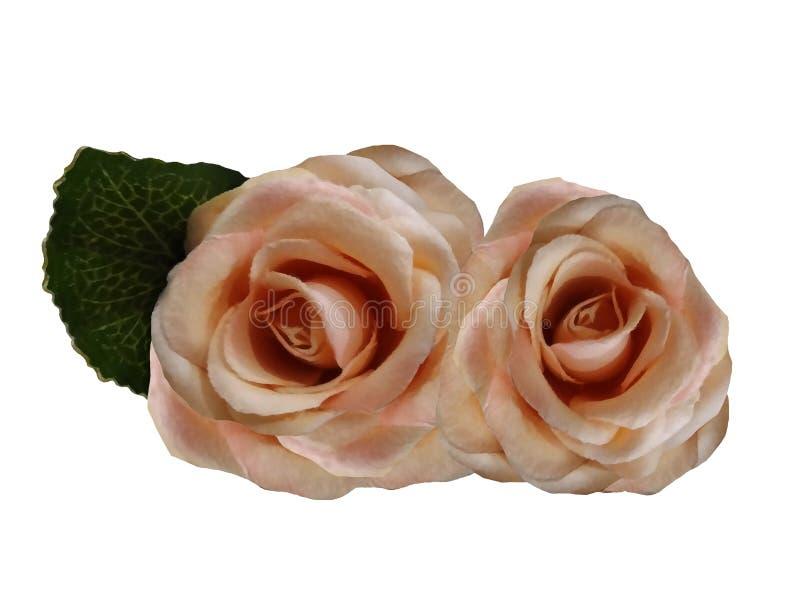 Flores aquarelas de rosas sobre fundo branco. Rosas isoladas com caminho de recorte sem sombras fotografia de stock royalty free