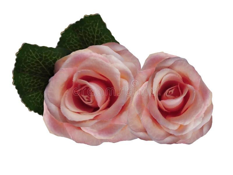 Flores aquarelas de rosas sobre fundo branco. Rosas rosa isoladas com caminho de recorte sem sombras. Para o projeto imagem de stock