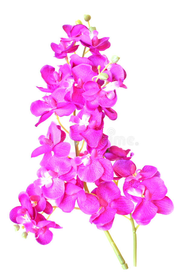 Flores artificiales coloridas de la orquídea aisladas en el fondo blanco foto de archivo