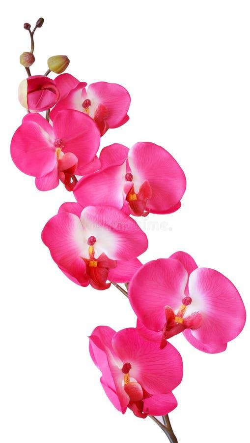 Flores artificiales coloridas de la orquídea aisladas en el fondo blanco imagen de archivo