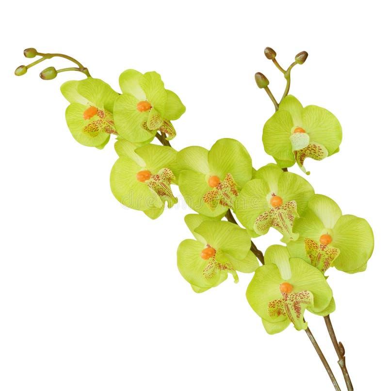 Flores artificiales coloridas de la orquídea aisladas en el fondo blanco fotografía de archivo