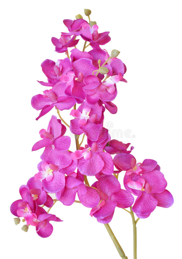 Flores artificiales coloridas de la orquídea aisladas en el fondo blanco imágenes de archivo libres de regalías