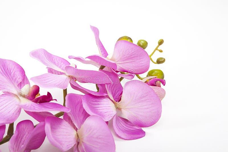 Flores artificiales del rosa y blancas aisladas en el fondo blanco fotografía de archivo libre de regalías