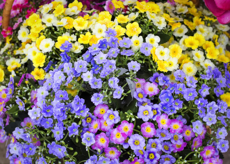 Flores artificiales multicoloras coloridas del fondo pequeñas en un b foto de archivo libre de regalías