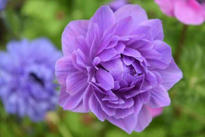 Flores asombrosas en el parque local en Chester fotografía de archivo libre de regalías