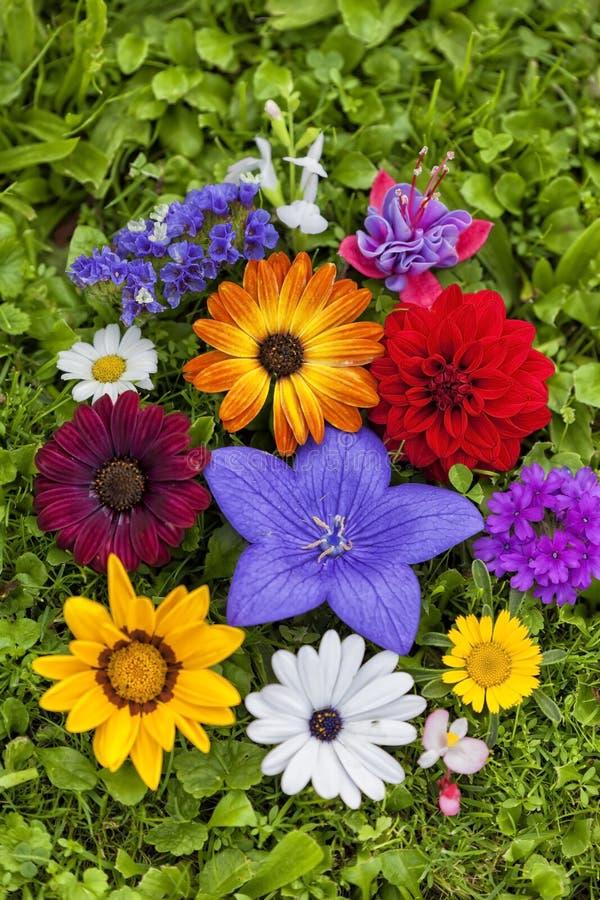 Flores Assorted fotos de stock