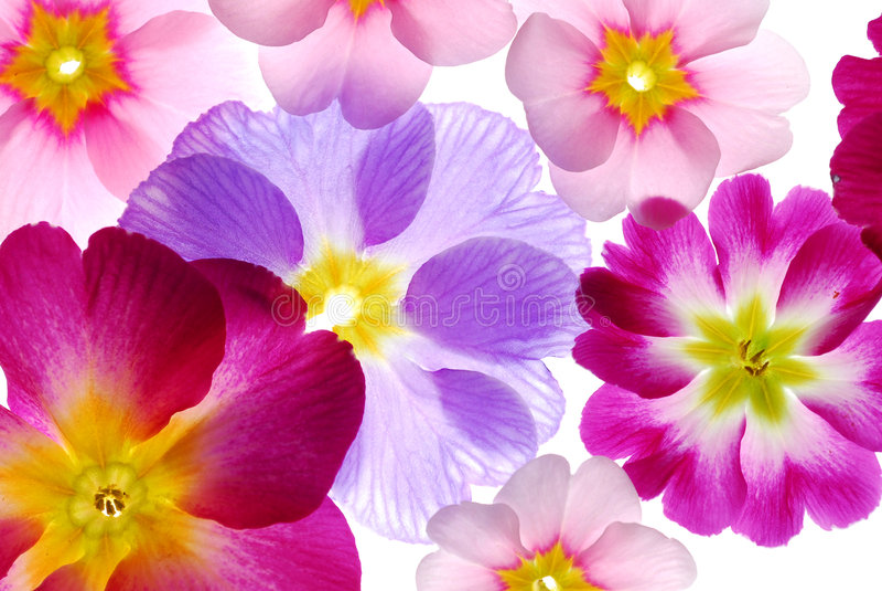 Flores Assorted da mola fotos de stock royalty free