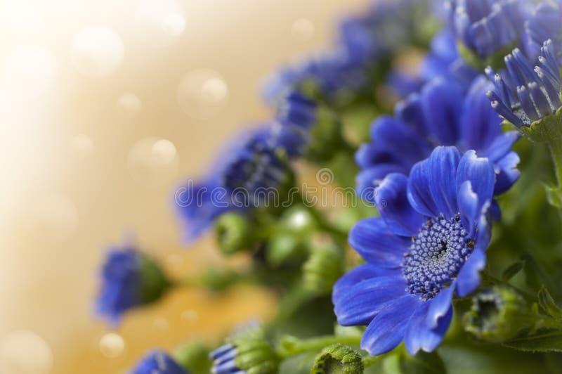 Flores azuis bonitas fotografia de stock royalty free