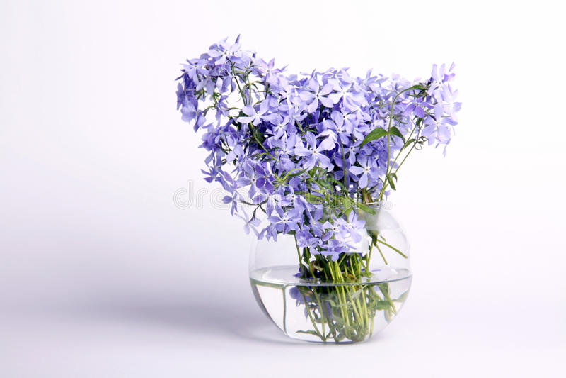 Flores azuis delicadas fotos de stock royalty free