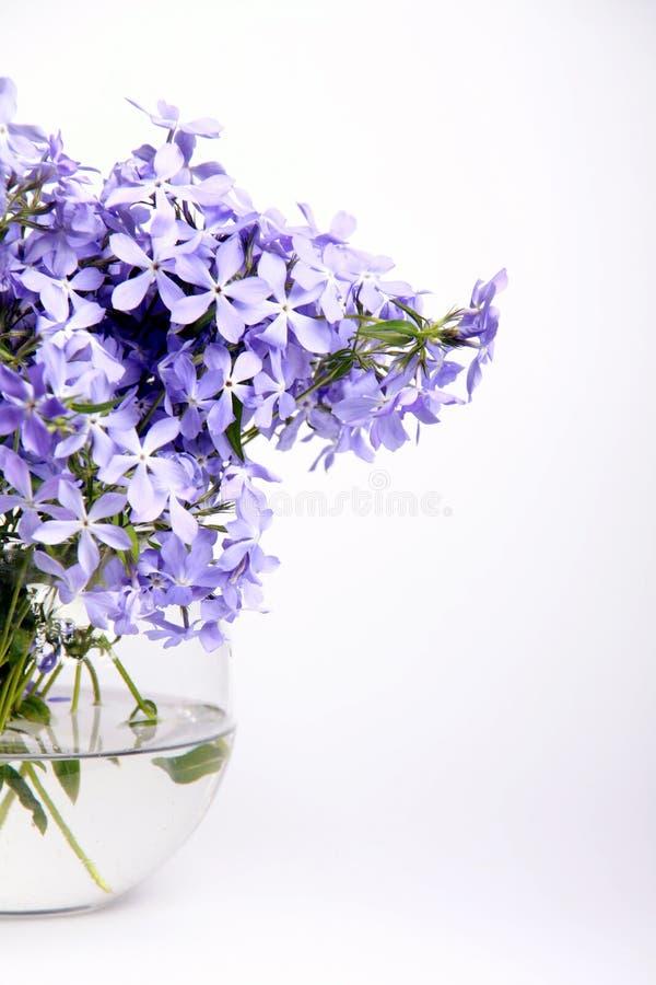 Flores azuis delicadas fotos de stock