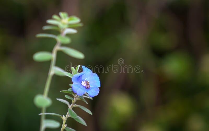 Flores azuis do diamante com espaço da cópia imagem de stock royalty free