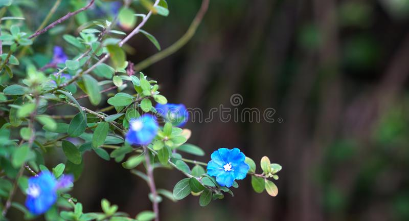 Flores azuis do diamante com espa?o da c?pia imagens de stock