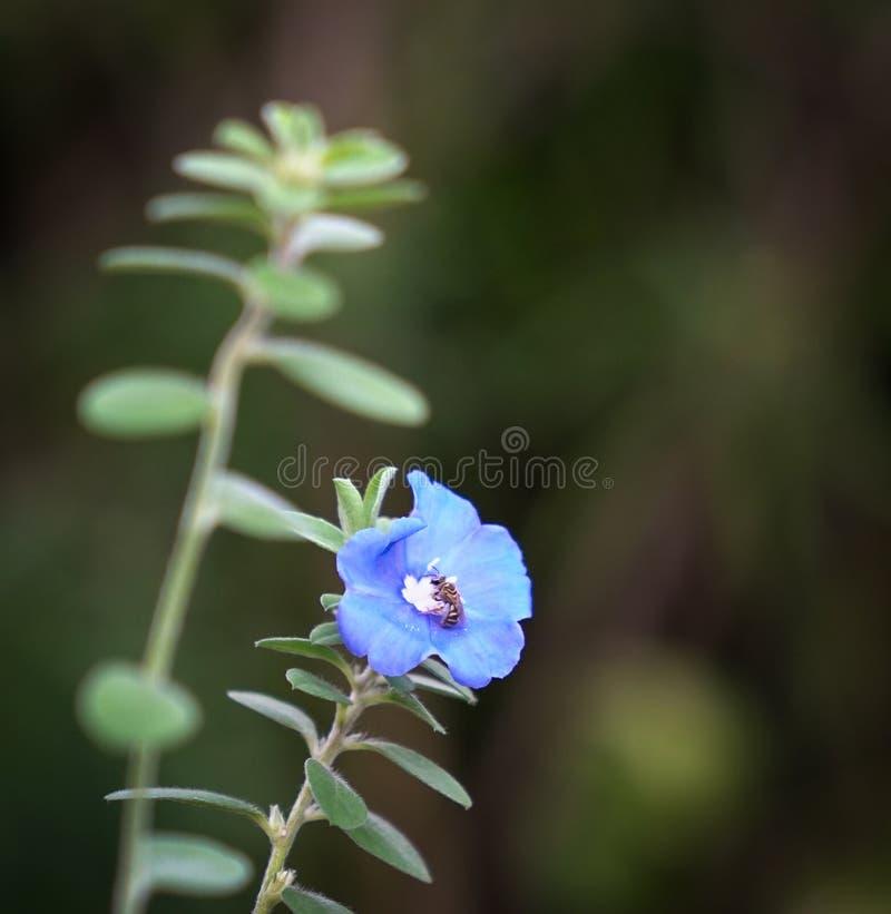 Flores azuis do diamante com espa?o da c?pia fotografia de stock royalty free