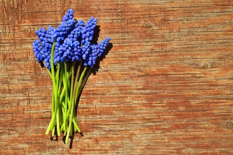 Flores azuis do Muscari em um fundo de madeira imagens de stock
