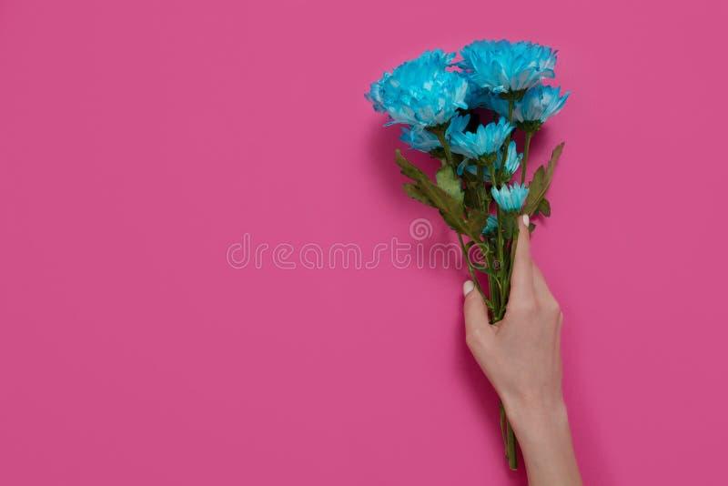 Flores azuis e m?o da terra arrendada da mulher isolada no fundo cor-de-rosa Mulher e dia da m?e Zombaria do conceito do ver?o ac fotos de stock royalty free