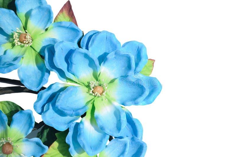 Flores azuis e verdes do close up no fundo branco, espaço da cópia fotografia de stock royalty free
