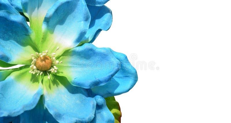 Flores azuis e verdes do close up no fundo branco, espaço da cópia imagens de stock