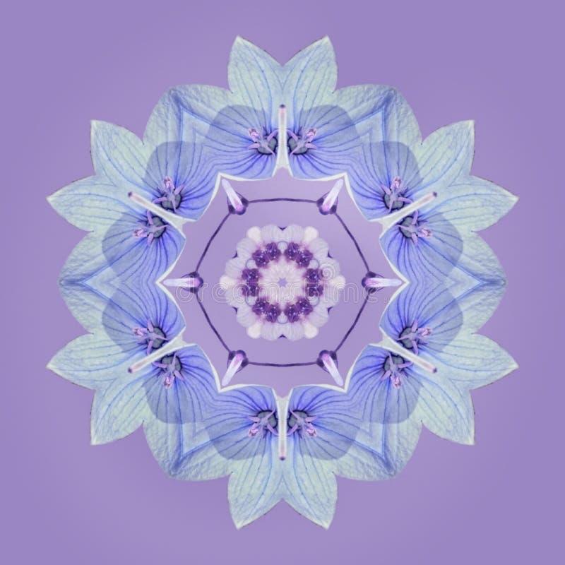 Flores azuis na mandala ilustração do vetor