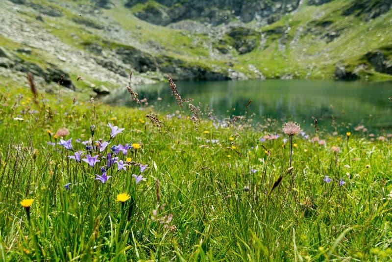 Flores azules imágenes de archivo libres de regalías