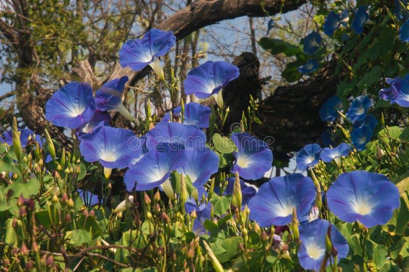 Download Flores azules foto de archivo. Imagen de madera, flores - 44850794