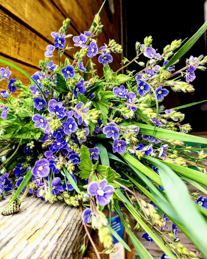 Flores azules imagen de archivo