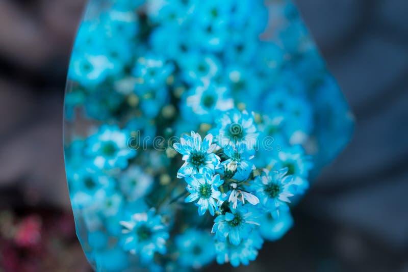 Flores azules borrosas de la imagen de fondo foto de archivo