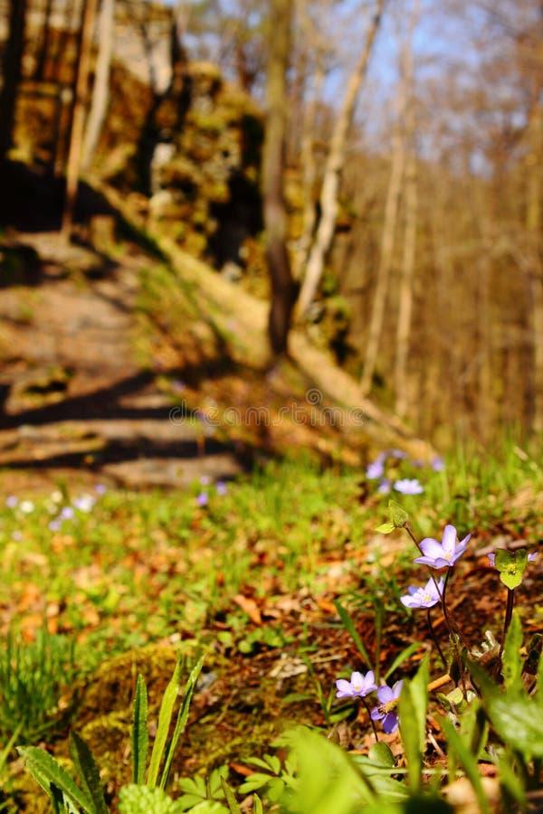 Flores azules y blancas por las ruinas del castillo fotos de archivo