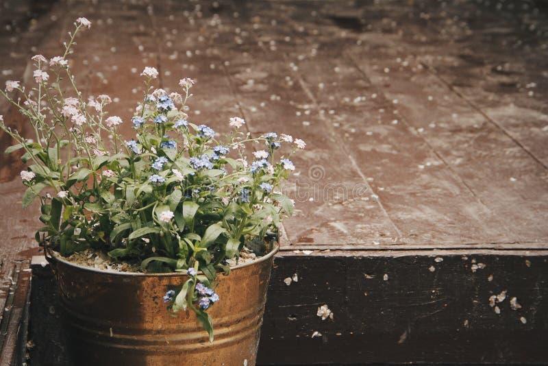 Flores azules y rosadas fotografía de archivo libre de regalías