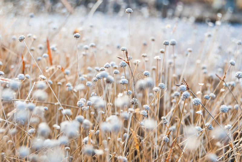 Flores blancas fotos de archivo