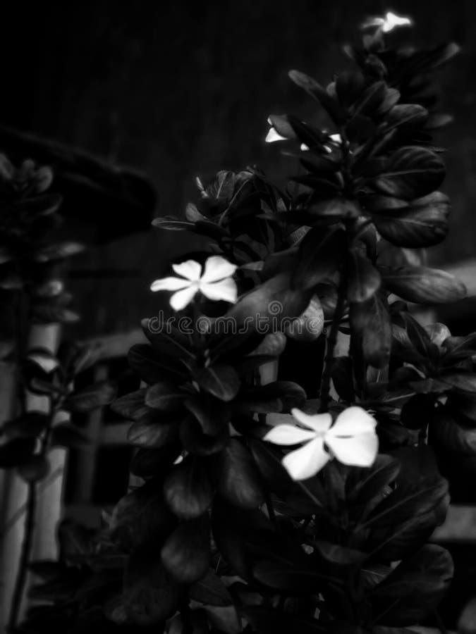 Flores blancas bajo la lluvia fotografía de archivo libre de regalías