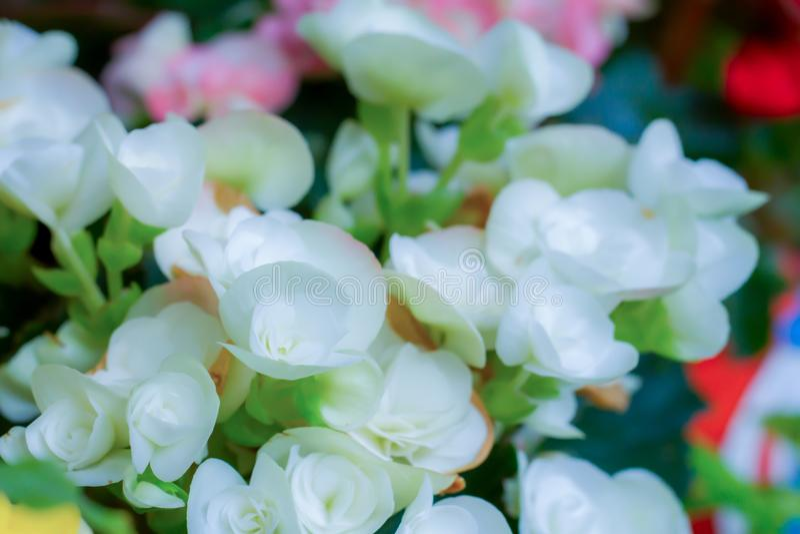 Flores blancas borrosas de la imagen de fondo imágenes de archivo libres de regalías