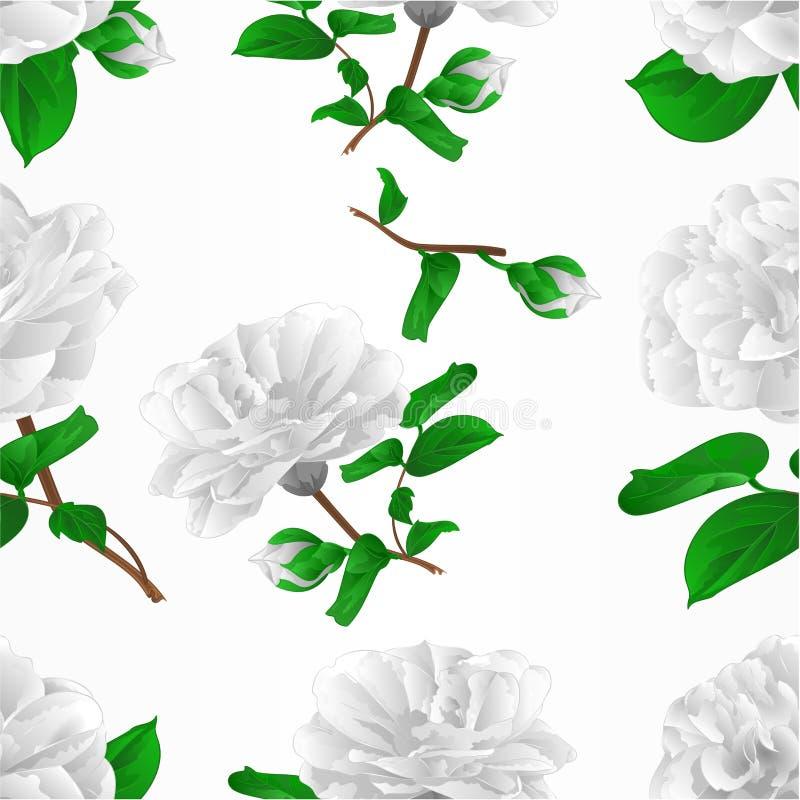 Flores blancas Camellia Japonica de la textura tres inconsútiles con el ejemplo del vector del vintage de los brotes editable ilustración del vector