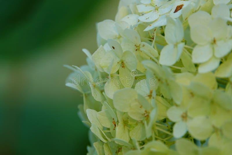 Flores blancas de la boda imagenes de archivo