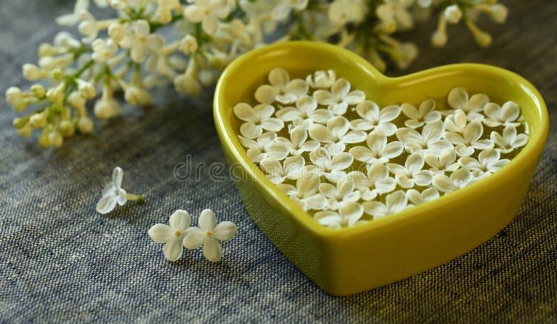 Flores blancas de la lila foto de archivo libre de regalías