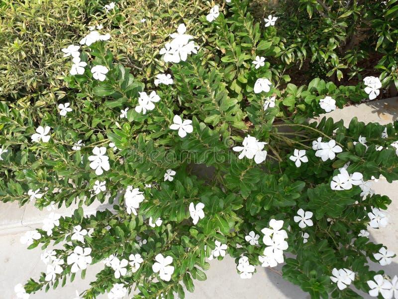 Flores blancas de la naturaleza y árbol verde hermoso fotografía de archivo