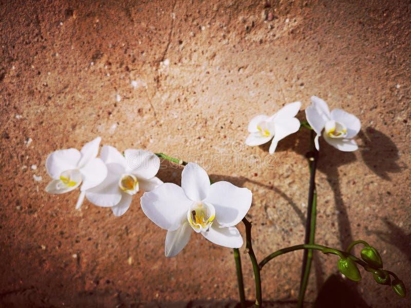 Flores blancas de las orquídeas fotos de archivo libres de regalías